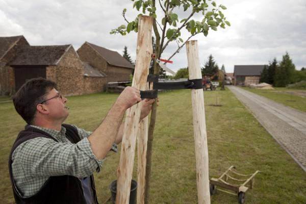Ingo Schuster pflanzt einen neuen Apfelbaum auf seinem Hof
