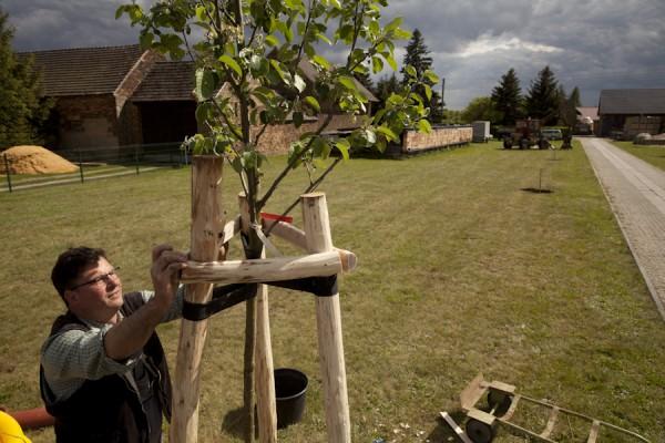 Ingo Schuster pflanzt einen Apfelbaum in seiner Einfahrt