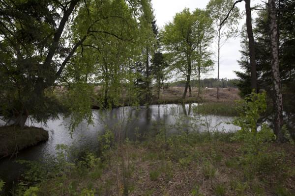 """Die Fläche rund um den """"Märchensee"""" im bereits 1994 genehmigten Abbaugebiet ist schon gerodet"""