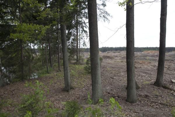Rodung für den Tagebau am ehemaligen Märchensee