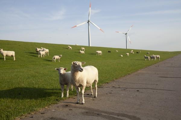 Bürgerwindpark im Nordosten der Insel Pellworm